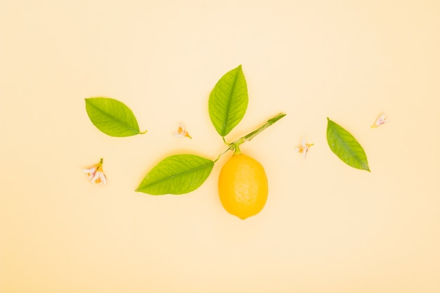 Top view lemon with leaves