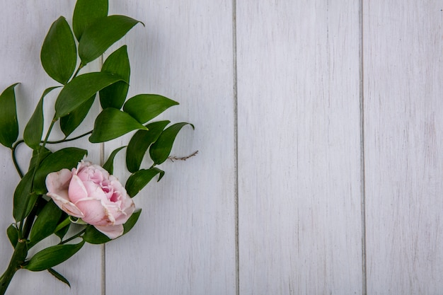 Top view of light pink rose with a branch of leaves on a gray surface