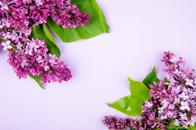 Top view of lilac flowers isolated on white background with copy space