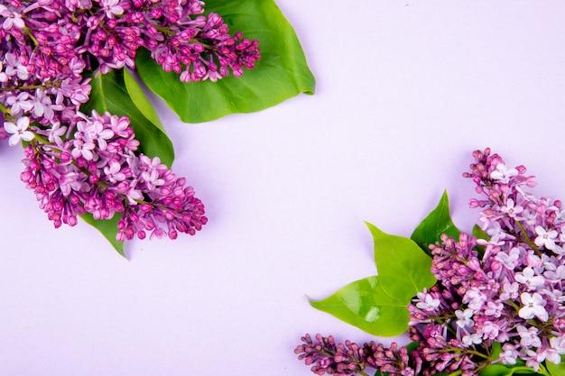 Vista dall'alto di fiori lilla isolato su sfondo bianco con spazio di copia