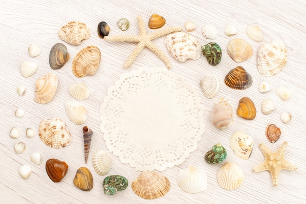 Top view little sea shells different formed and colored on the white background sea ocean sea water shell