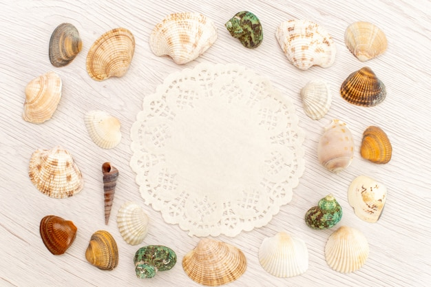 Top view little sea shells different formed and colored on white background sea ocean sea water shell