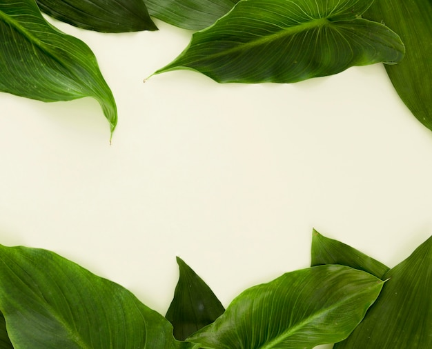 Vista dall'alto di un sacco di foglie con copia spazio
