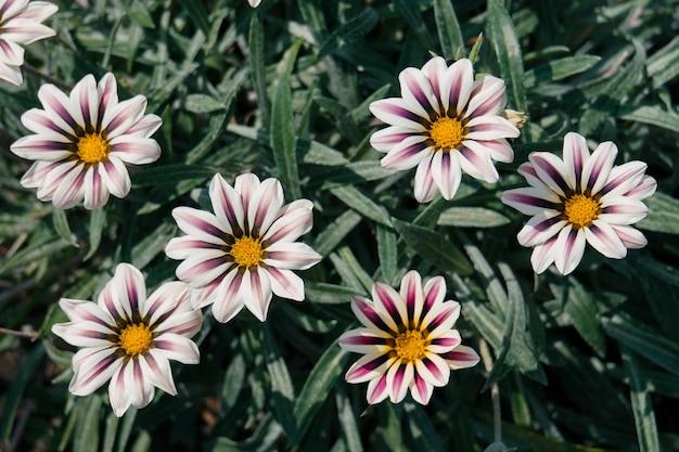 美しい花の上面マクロ撮影