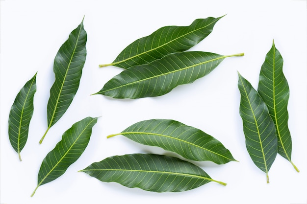 Top view of mango leaves on white.