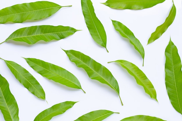 Top view of mango leaves.