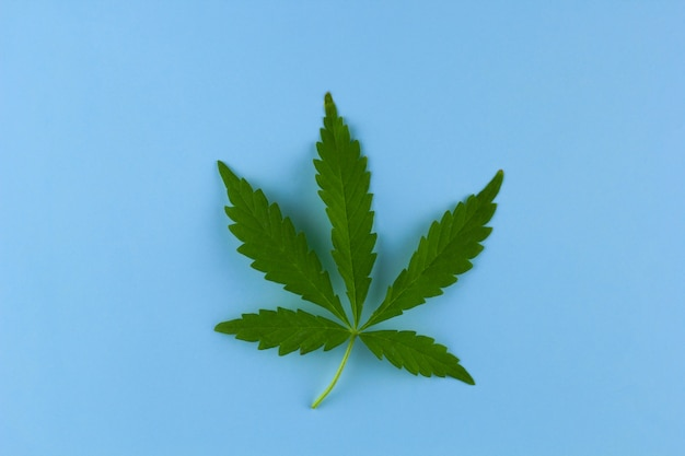 Top view marihuana leaf on a bright background