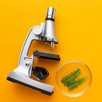 Top view microscope and plant