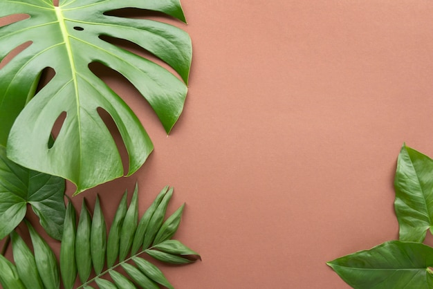 Top view minimal tropical leaves composition