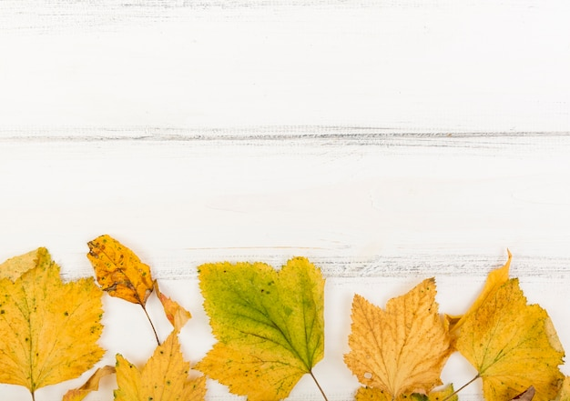 Top view minimalistic autumn leaves with copy space