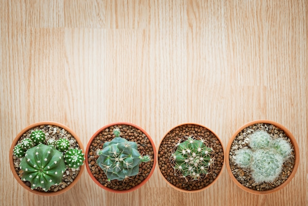 Top view of mix cactus pot on wooden background with copy space flat lay style