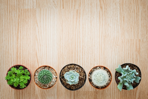 Top view of mix cactus and succulent on wooden background