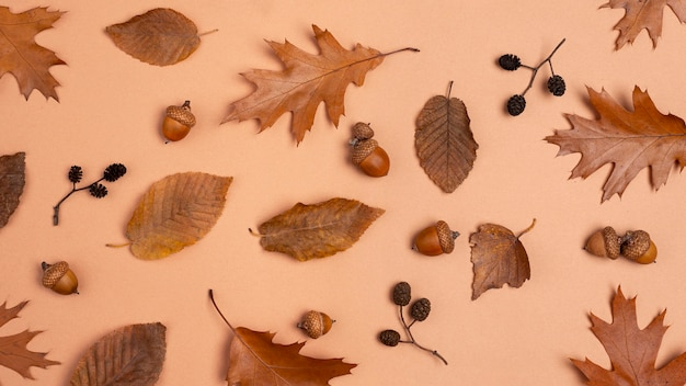 Top view of monochromatic assortment of leaves