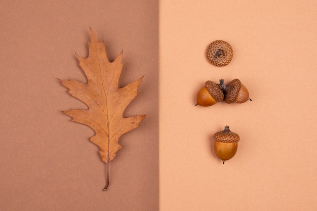 Top view of monochromatic leaf and acorns