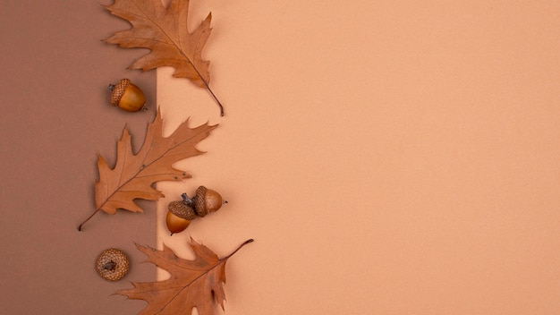 Top view of monochromatic leaves and acorns with copy space
