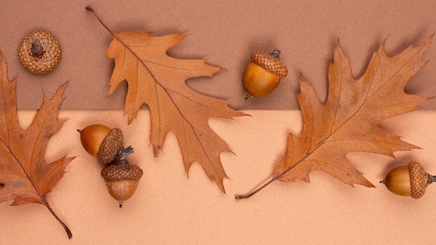 Top view of monochromatic leaves and acorns