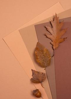 Vista dall'alto di foglie e colori monocromatici