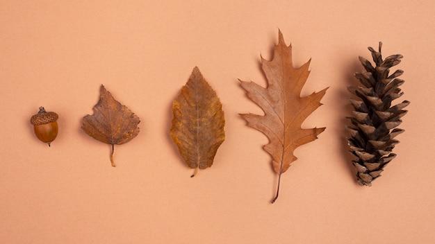Vista dall'alto di foglie e coni monocromatici