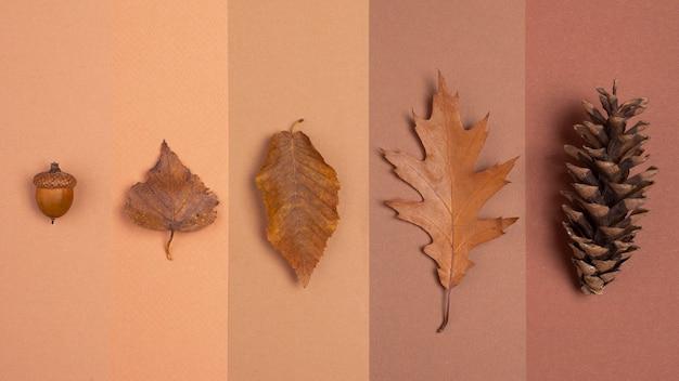 Vista dall'alto di linee monocromatiche con foglie e cono