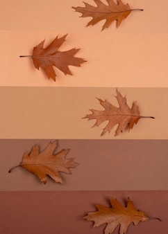 Vista dall'alto di linee monocromatiche con foglie