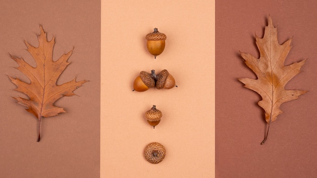 Top view of monochromatic selection of leaves and acorns