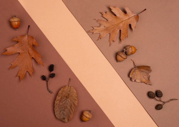Vista dall'alto della varietà monocromatica di foglie
