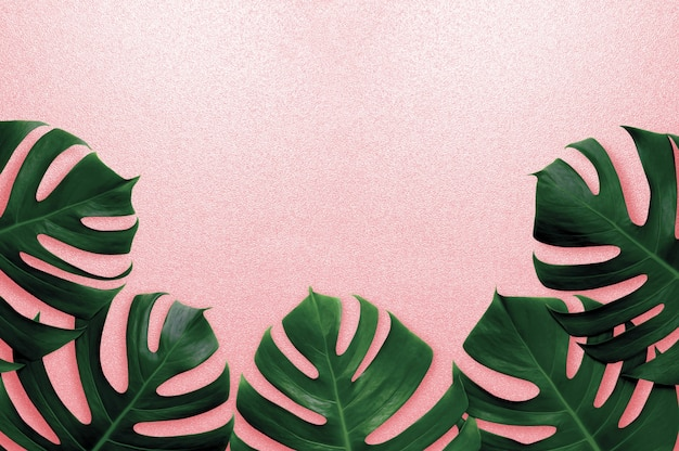 Top view monstera green leaves on pink