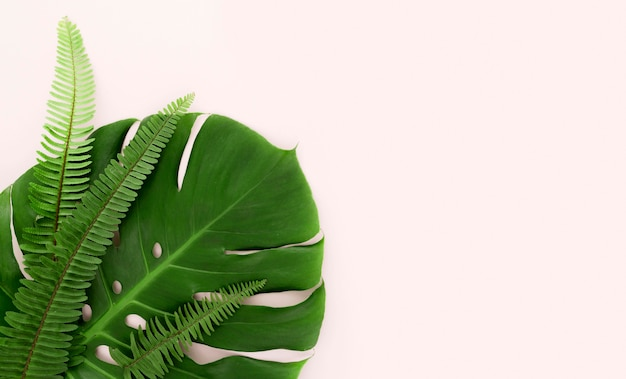 Top view of monstera leaf and ferns with copy space