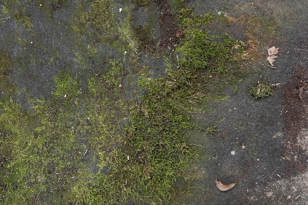 Top view moss on the ground