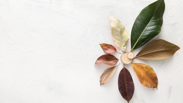 Vista dall'alto di foglie di autunno multicolori con spazio di copia