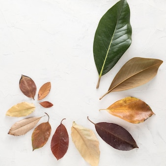 Top view of multicolored autumn leaves