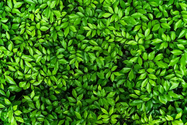 Top view of natural green leaf for nature background
