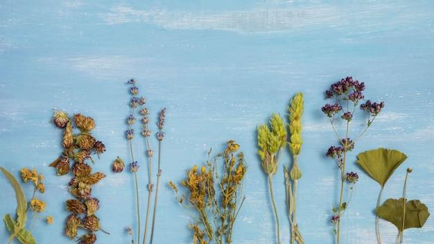 Vista dall'alto di spezie ed erbe medicinali naturali