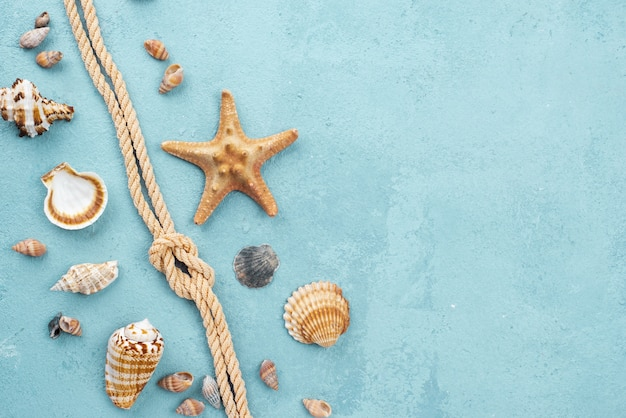 Top view nautical rope with shellfish