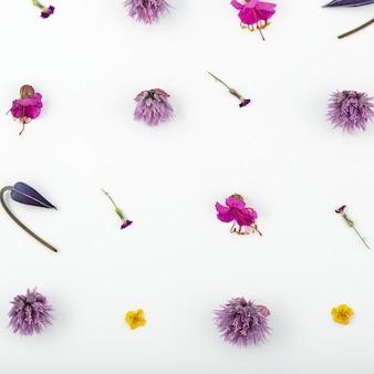 흰색 배경에 꽃 조성의 상위 뷰