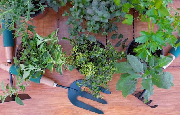 芳香性ハーブのポットのグループの上面図。木製のテーブルの上の園芸工具
