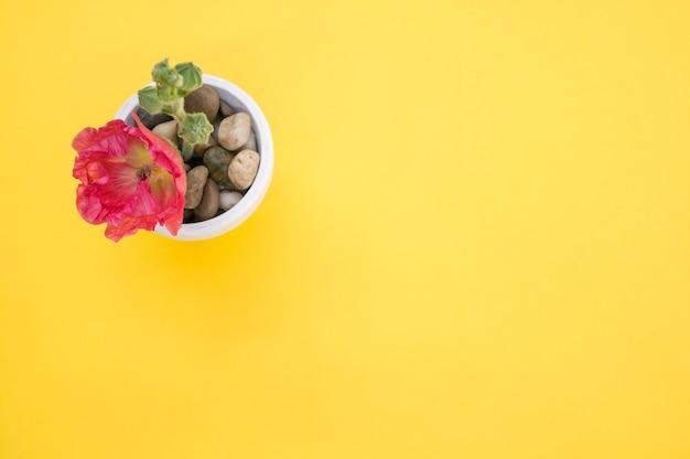 노란색 표면에 배치 작은 화분에 분홍색 카네이션 꽃의 상위 뷰