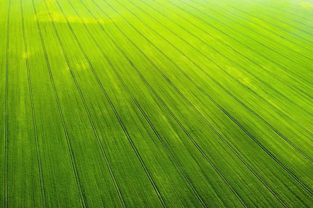 ベラルーシの播種された緑と灰色のフィールドの上面図。ベラルーシの農業。テクスチャ。
