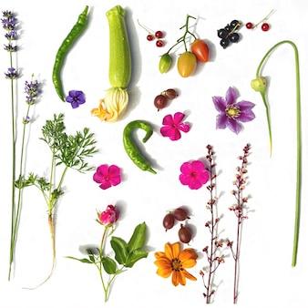あなたの庭からさまざまな野菜のベリーや花の白い背景の上面図