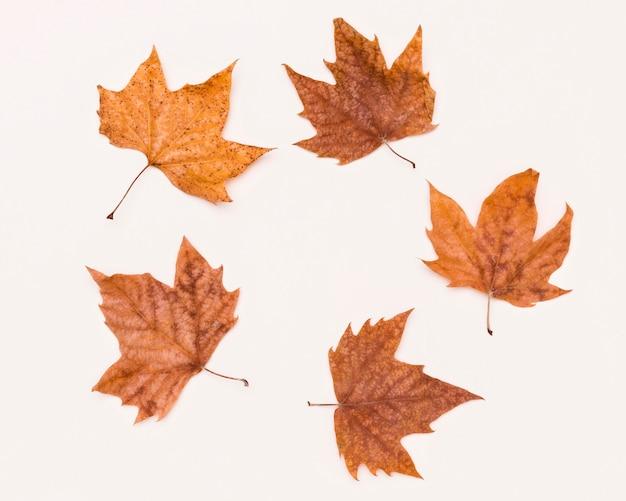 Вид сверху ассортимента осенних листьев