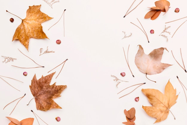 秋の植物と葉の品揃えのトップビュー