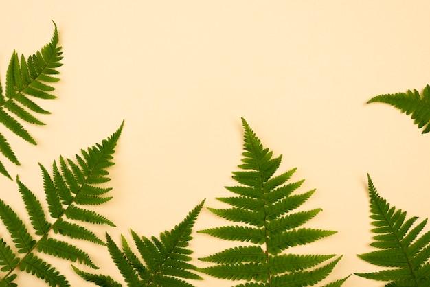 Вид сверху ассортимента листьев папоротника с копией пространства