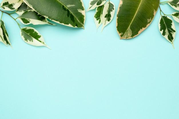 Вид сверху ассортимента листьев растений