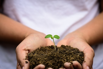 Top view of baby tree with soil in background on woman hand