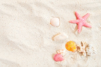 Top view of beach sand with shells and starfish