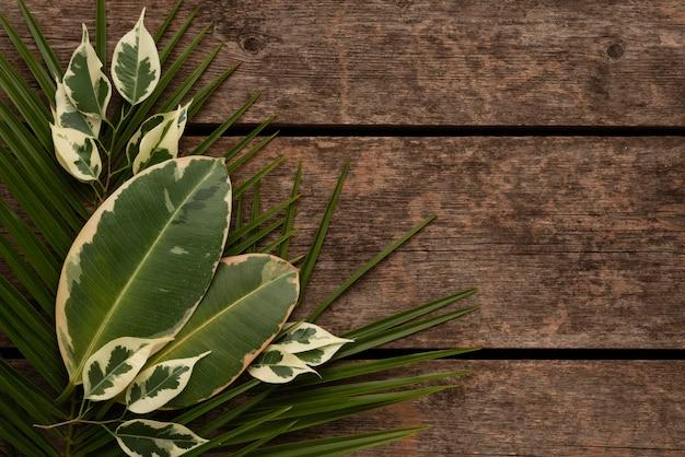 Вид сверху красивого ассортимента листьев растений с копией пространства