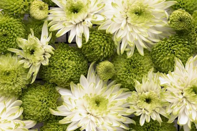 さまざまな色の美しい花の上面図
