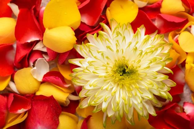 Вид сверху красивых цветов разных цветов