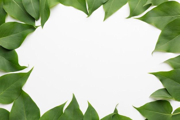 아름 다운 라일락의 상위 뷰 나뭇잎 프레임 개념