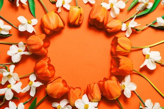 오렌지 배경에 아름다운 오렌지 튤립과 흰색 수선화 원형 프레임의 상위 뷰